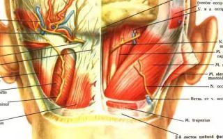 Болит затылок с правой стороны головы: причины, головная боль