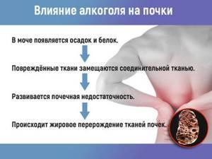Почки болят: лечение народными средствами, чем лечить