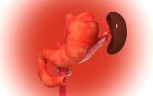 Селезенка болит: симптомы, у женщин, как болит, причина