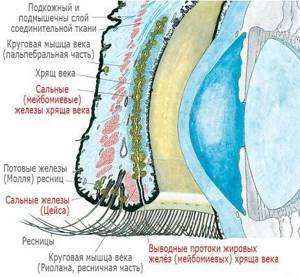 Болит глаз под верхним веком больно нажимать: внутри