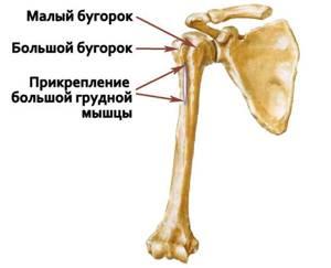 Упражнения после перелома плечевой кости: реабилитация, лечебная гимнастика